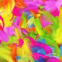 Assorted Colour Feathers